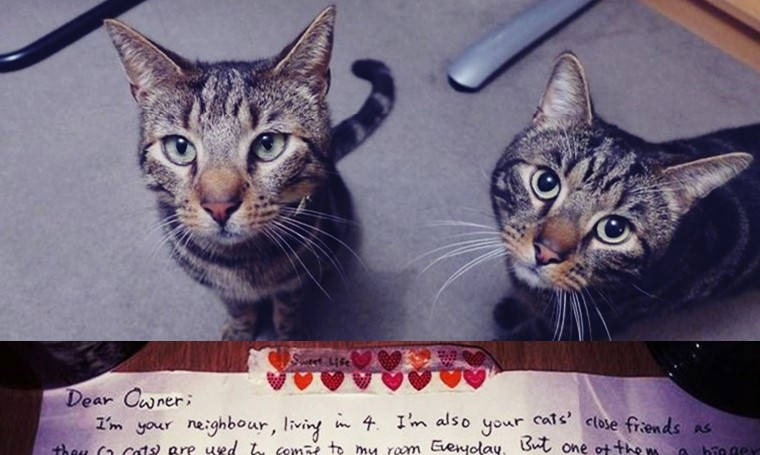 cats neighbor heartfelt note