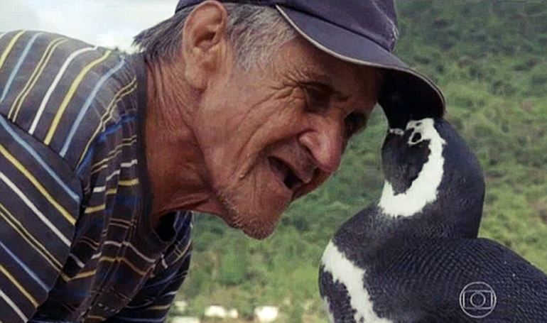 loyal penguin reunites with man